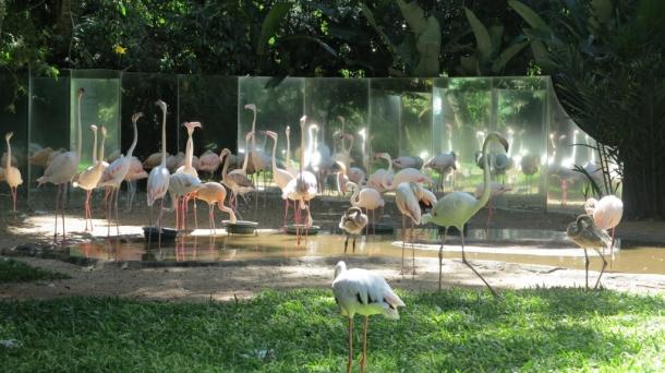 bird park (1)