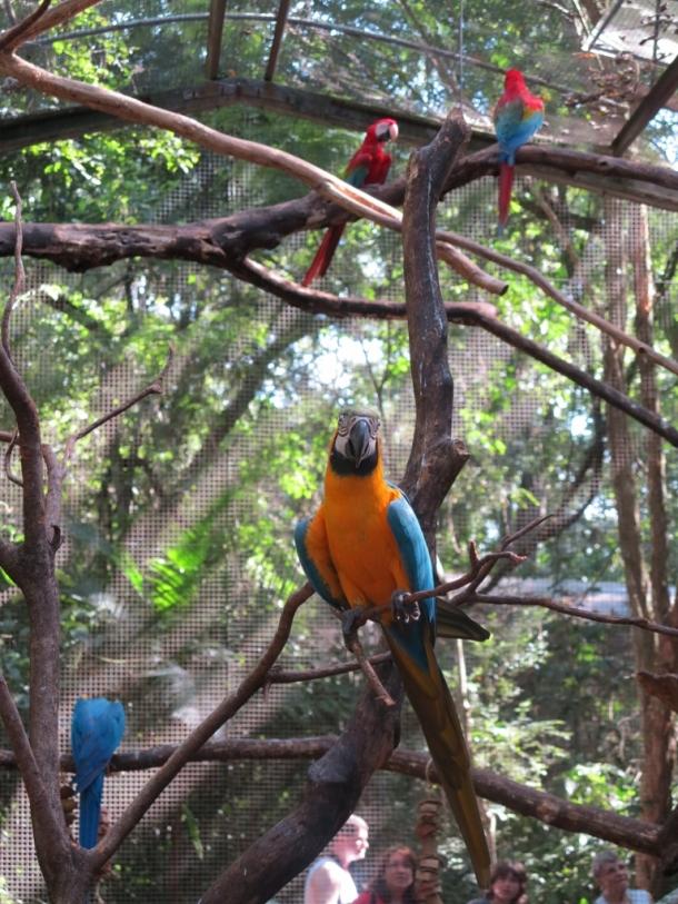 bird park (13)