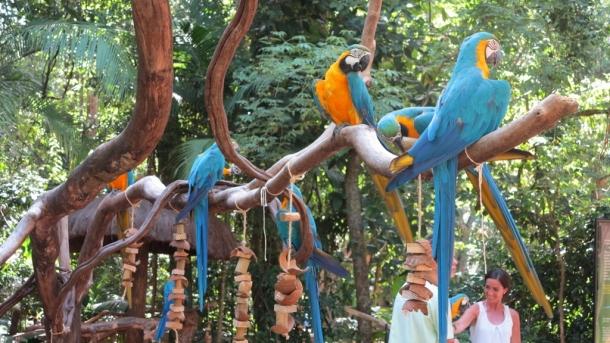 bird park (14)