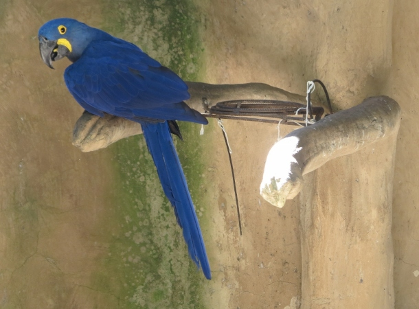 bird park (15)