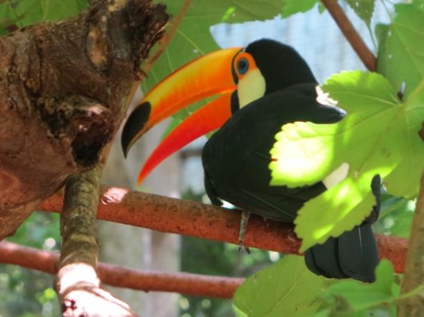 bird park (3)