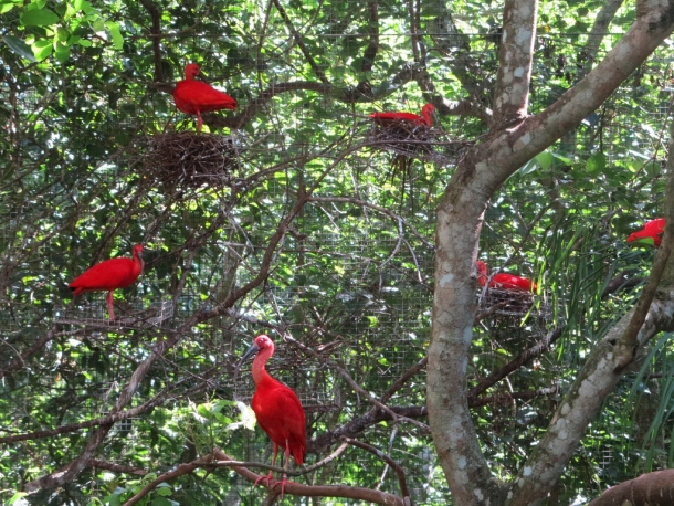 bird park (6)