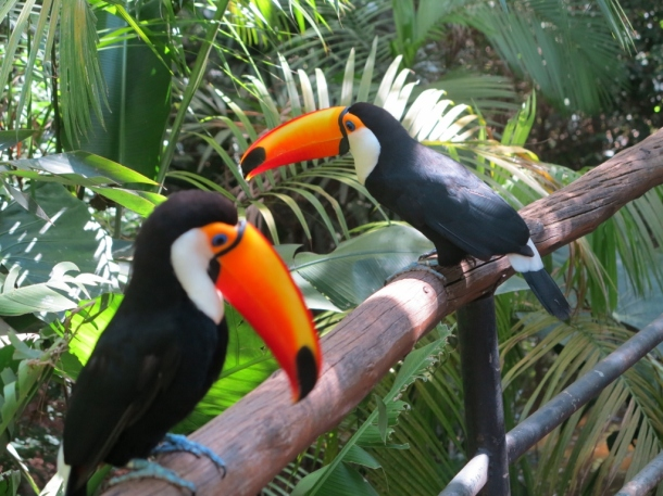 bird park (7)