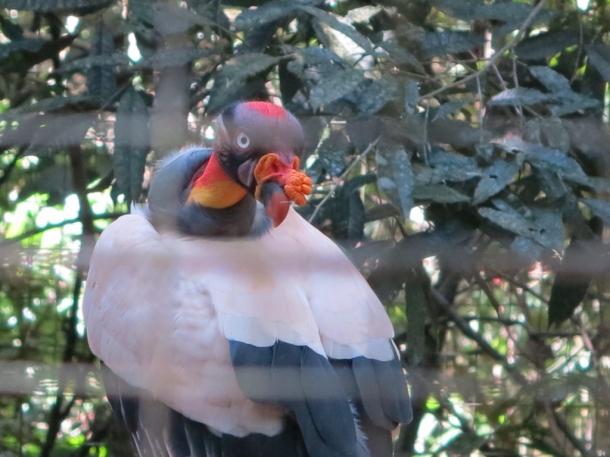 bird park (8)