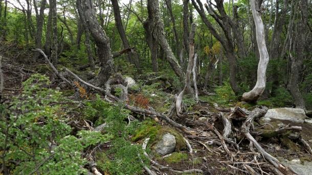 ushuaia valle de los lobos (10)
