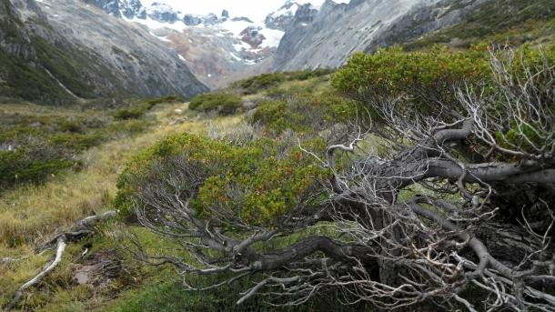 ushuaia valle de los lobos (15)