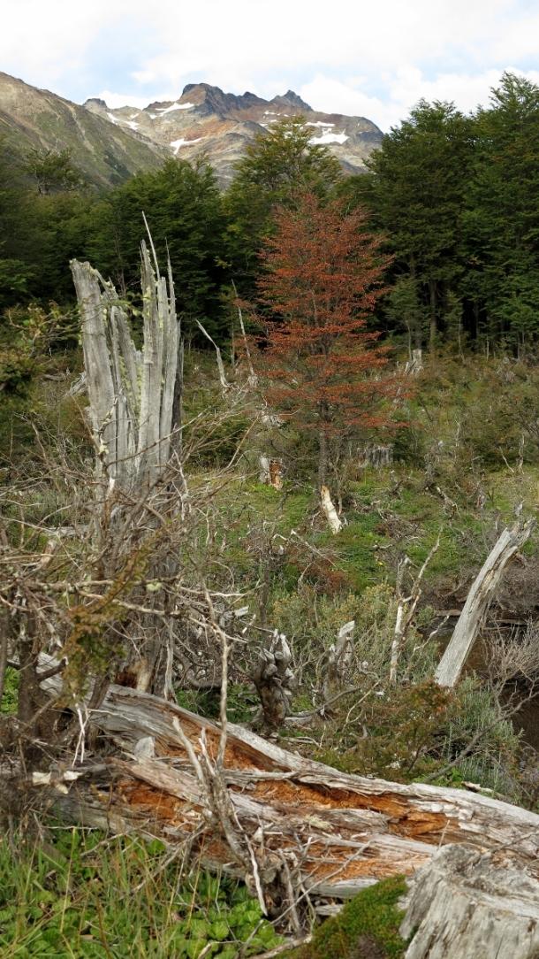 ushuaia valle de los lobos (3)