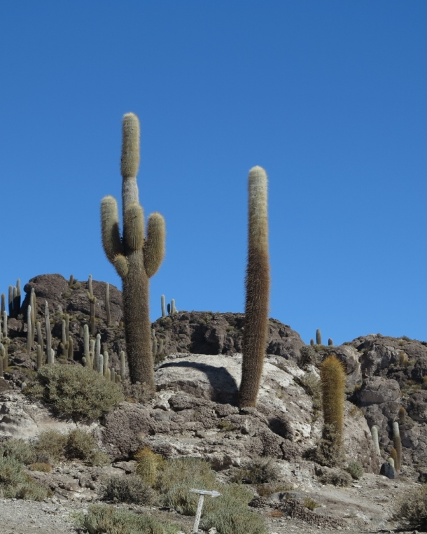 This cactus is clearly giving the middle finger