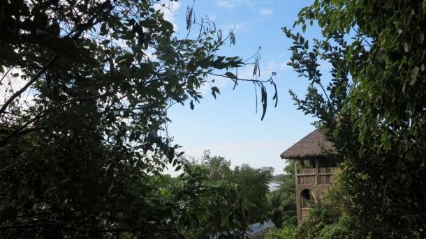 amazon pampas (3)